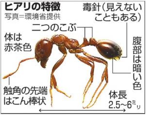 ヒアリ の大きさや特徴は?